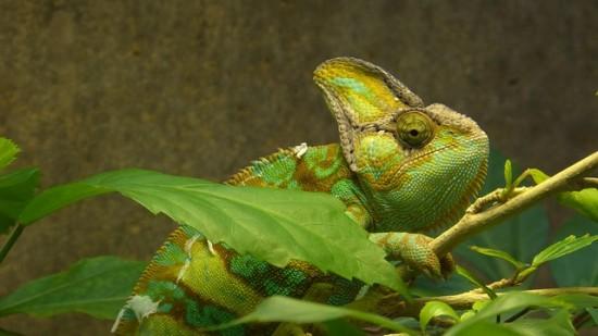 Plantas para el terrario de reptiles