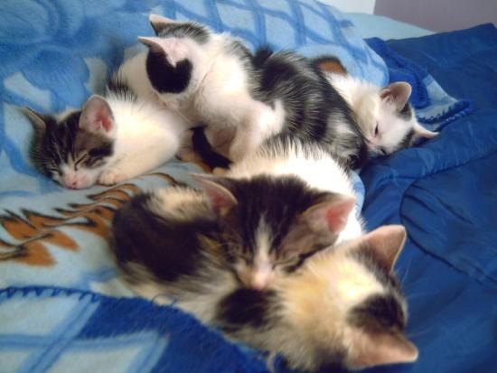 Criar gatitos lactantes, todo un reto (II)