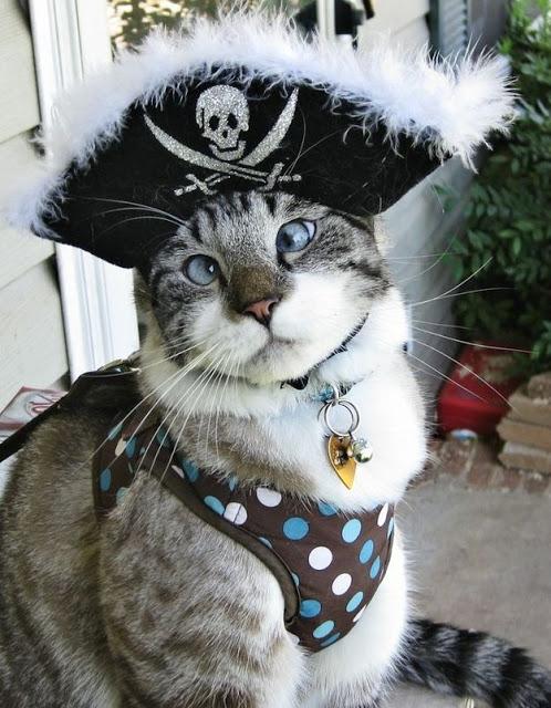 Internet, ¿el paraíso de los gatitos?