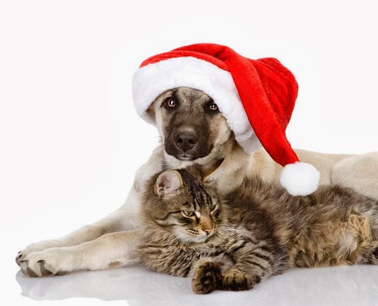 Cuidado con perder a tu mascota en Navidad