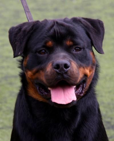 Leyendas perrunas: los perros negros