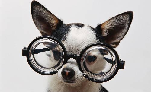Mitos sobre perros (I)