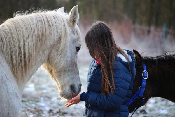 La alimentación de los caballos