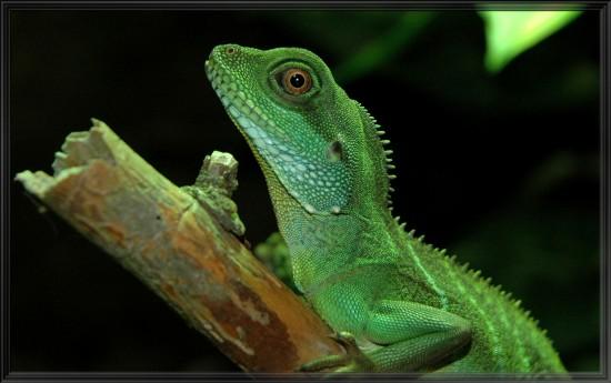 Elegir el sustrato adecuado para nuestro reptil (I)