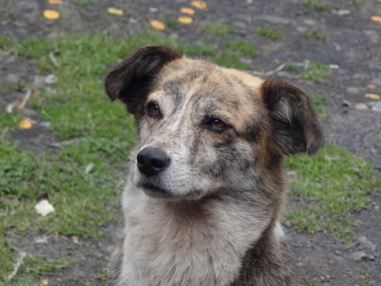 Día del perro sin raza: 28 de mayo