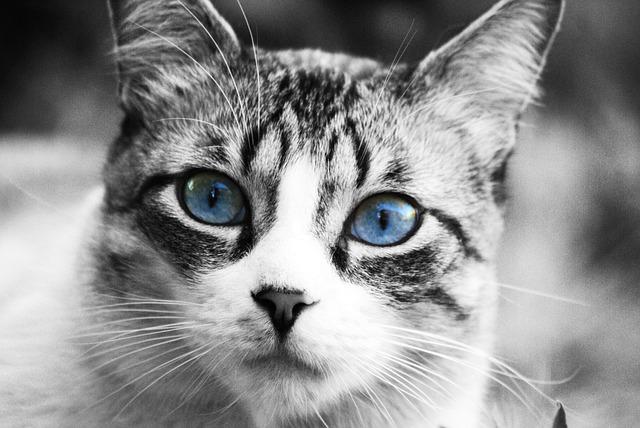 Terapia felina: el TOC (I)