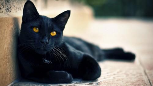 Leyendas gatunas: la marca blanca en el gato negro