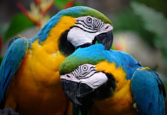 Loros, los parlanchines multicolores del hogar