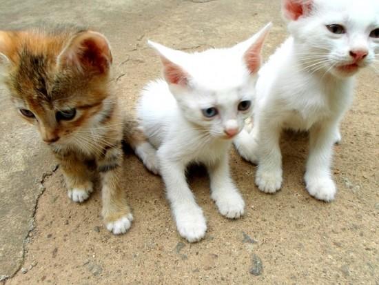 La esterilización de tu gato, una decisión a tomar