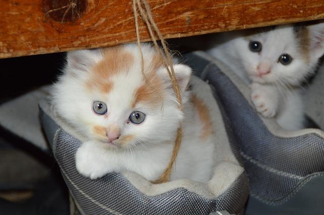 Enfermedades renales en gatos