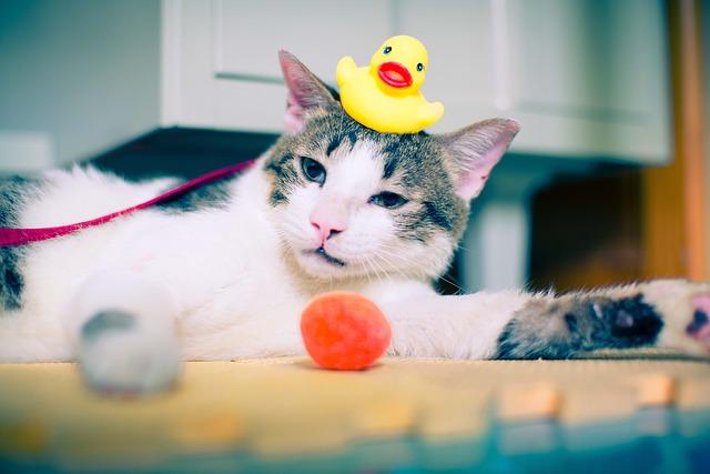 Trucos para que tu gatito no te vuelva loco