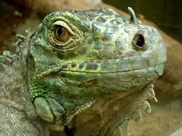 Reptiles y otras no mascotas