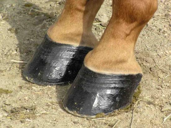 Cuidar los cascos del caballo, una tarea diaria