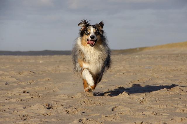 Perrillos a la mar (o a la playa)