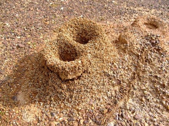Hormigas, cuando ruge la marabunta