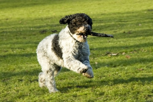 Terapia canina: la sobreexcitación (II)