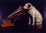 Los 40 animales: música para mascotas