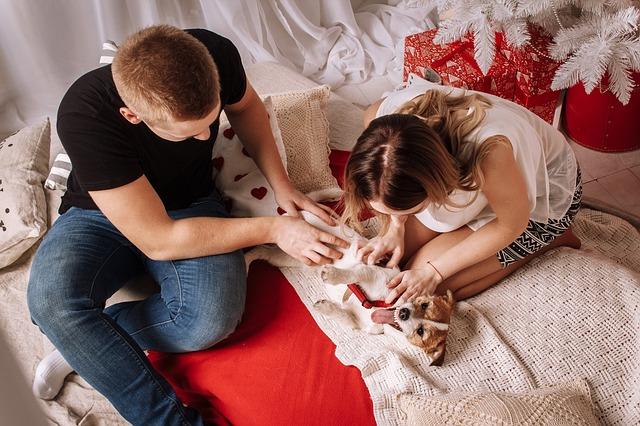 Riesgos de las mascotas en casa