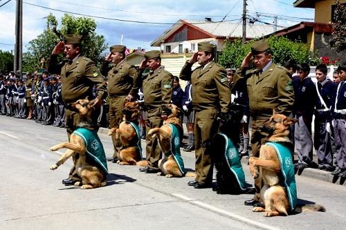 El conductismo, el origen de la educación canina