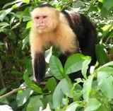 El polémico debate de los monos mascota