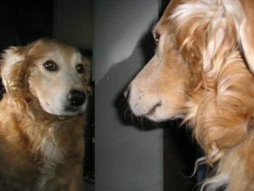 Especialidades veterinarias: la etología
