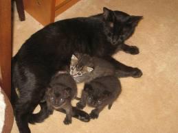 El embarazo psicológico en mascotas: cuando la mente juega malas pasadas