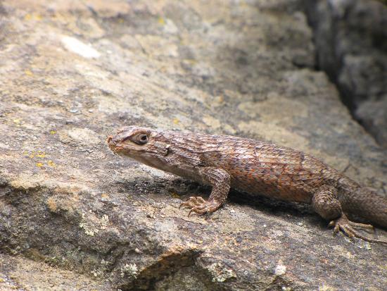 Los sistemas de calefacción para reptiles