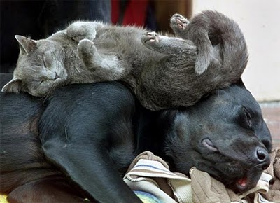 Como gatos y perros… ¿o tal vez no? (II)