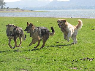 Lenguaje canino, un gran desconocido