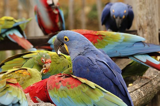 Las aves papilleras