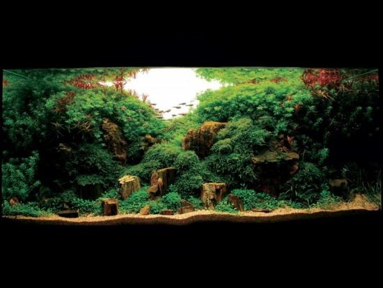La decoración del acuario, todo un arte