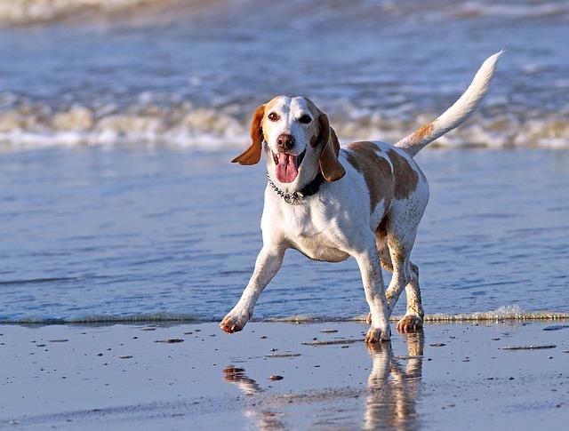 Vuelve la polémica con las playas para perros