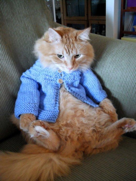 Moda para mascotas