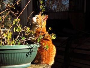 Gato tras maceta