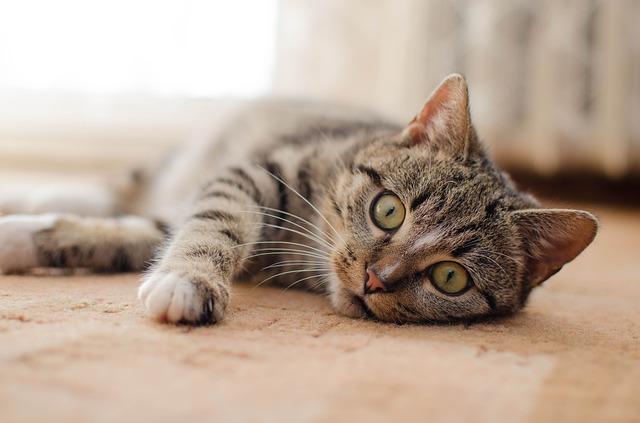gatos de avanzada edad