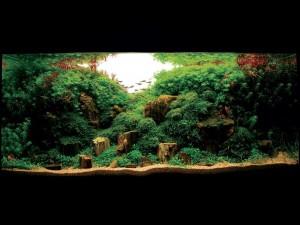 Diseño de acuario