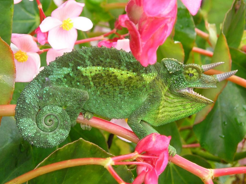 Cuidados específicos de los reptiles