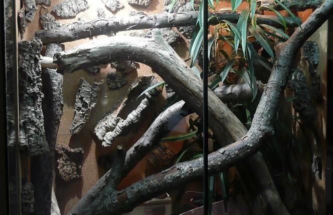 Nuestras ranas se merecen un buen terrario de anfibios