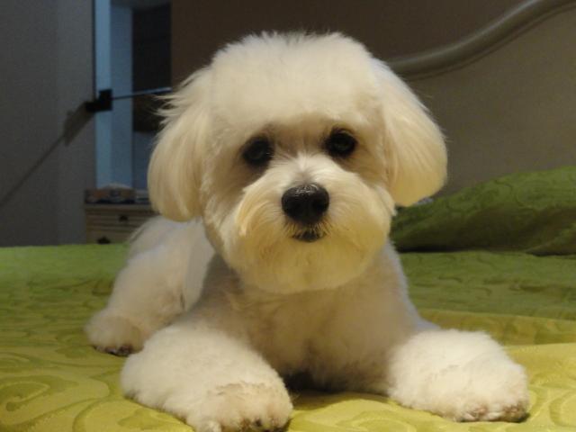Tarde en la peluquería de mascotas
