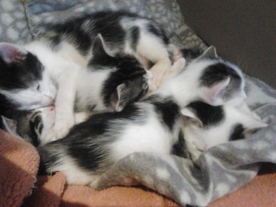 Gatitos lactantes