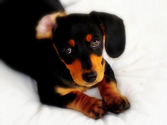 cachorro perro