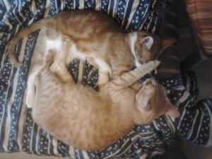 Gatos durmiendo abrazados