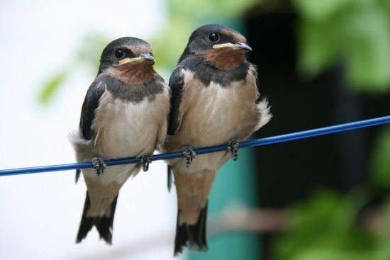 Pájaros posados