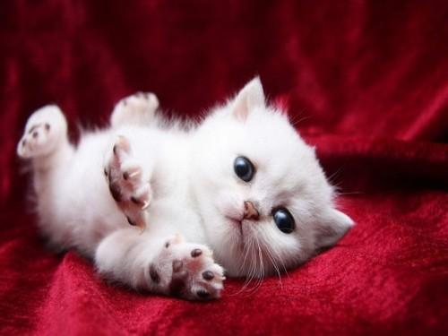 Cualquier noche los gatos de tu callejón (uh, uh, uuuuh)