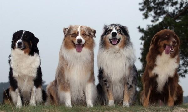 Perros posando para la cámara
