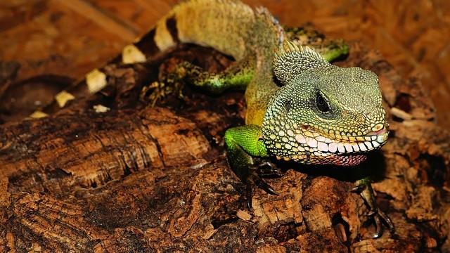 Reptil en terrario