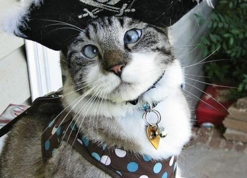 Spangls el lindo gato bizco famoso en Internet 3