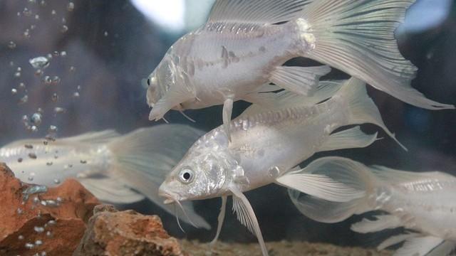 fish-390125_640
