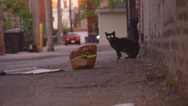 gato_vagabundo