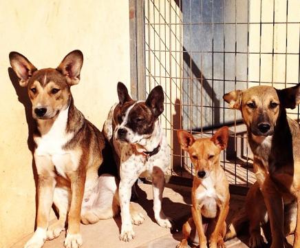 Protectora_de_Animales